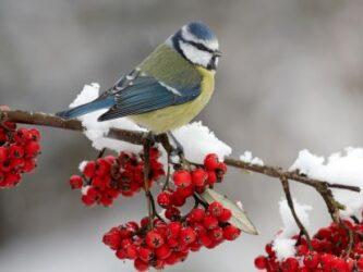 vogels-winter
